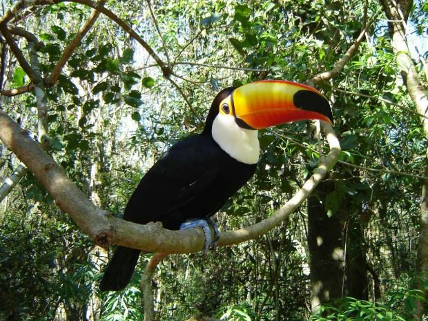 Belem e Manaus (5)